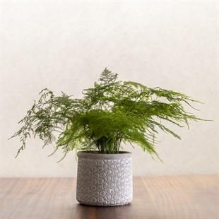 Grey Daisies Cement Planter 16cm