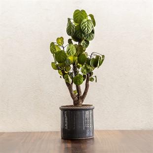 Compton Planter Grey 14cm