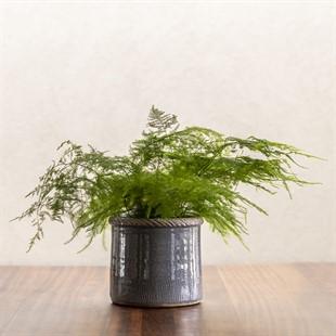 Compton Planter Grey 18cm