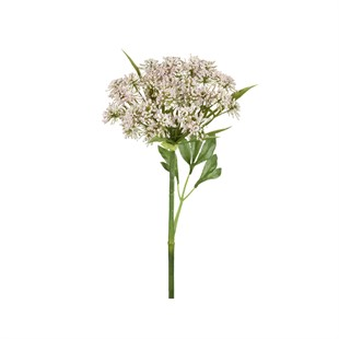 Queen Anne Lace Stem Light Pink