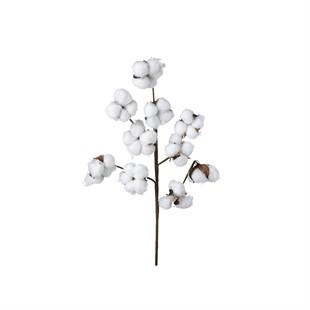 Cotton Stem White