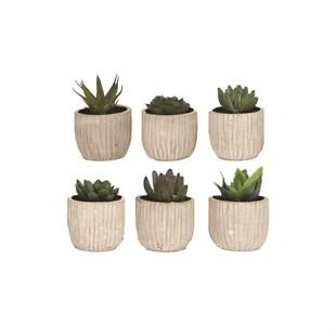 Single Assorted Mini Succulent