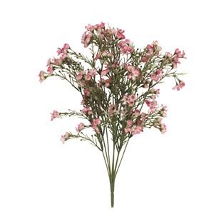 Pale Pink Wax Flower Bunch