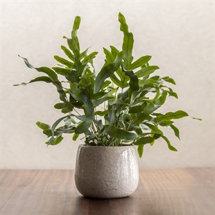 Ravello Pot - Large